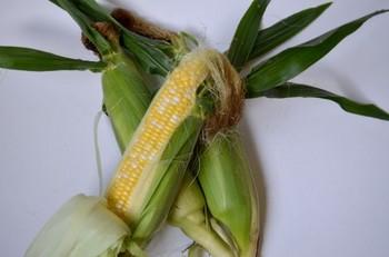 トウモロコシの選び方