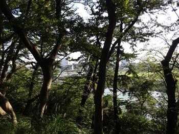 多摩川台公園見晴らし台2.png