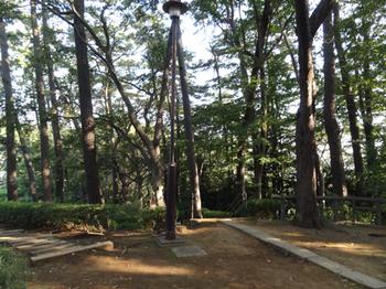 多摩川台公園アカマツ林1.png