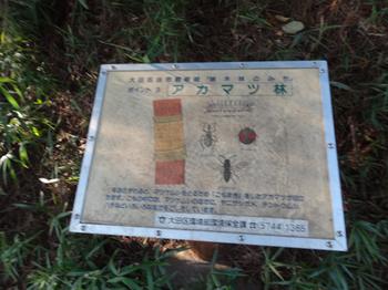 多摩川台公園アカマツ林2.png