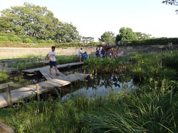 多摩川台公園水生植物園1.png