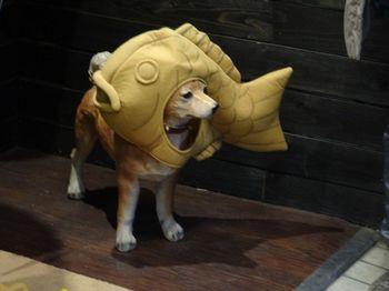 神戸発幸せの黄金鯛焼き